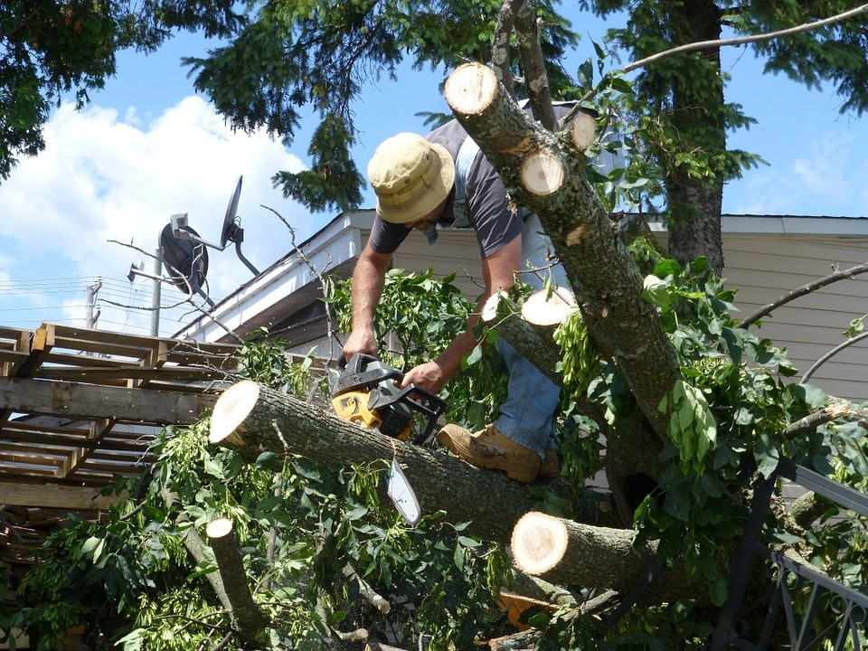tree removal and trimming contractor insurance